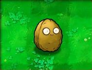 Wall-nut-Almanac.png
