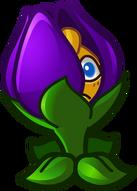 HD Shrinking Violet 2