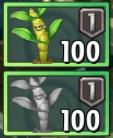 DendrobiumSeeds