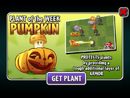 Plant of the Week Pumpkin