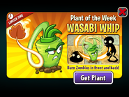 Plant of the Week Wasabi Whip