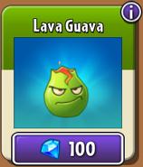 Lava Guava New Store