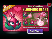 Plant of the Week Blooming Heart