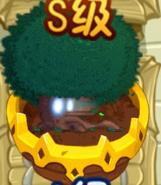 Cypress ZG
