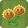 Twin SunflowerAS.png
