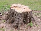 TreeStump.jpg