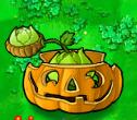 Cabbage pult pumpkin