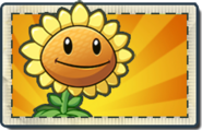 Sunflower Boosted Seed Packet