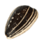 Sunflower seeds PNG12.png
