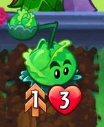 CabbagePultDoublestrike