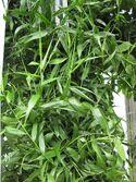 800px-Gardenology-IMG 4811 hunt10mar.jpg