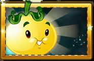 Solar Tomato New Premium Seed Packet