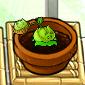 Smallcabbage