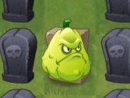 Squash-on-grave