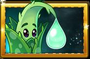 Aloe New Premium Seed Packet
