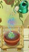 Dartichoke Watered