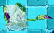 FrozenPokra