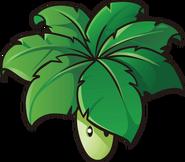 Umbrella Leaf 2