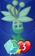FrozenMayflower