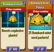 Bombard-mint and Bombard-mint Seed Packets in Store