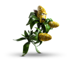 Kernel Corn.png