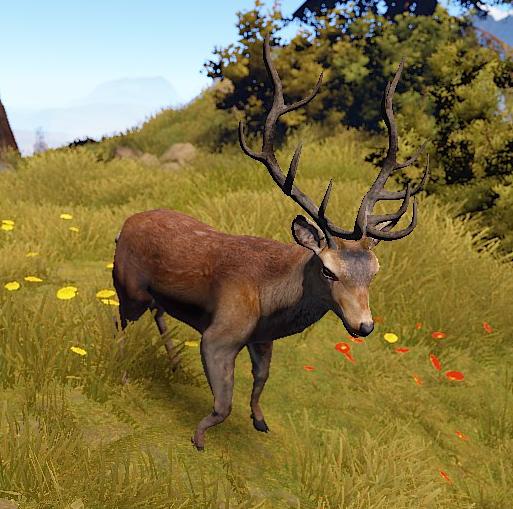 Deer (Main)
