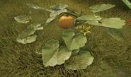 Pumpkin.plant