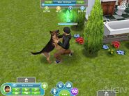 First-details-on-the-sims-freeplay-20111123115123264 640w