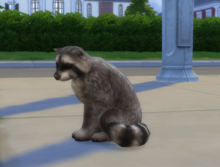 Szop w The Sims 4.png