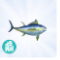 Tuńczyk ts4