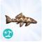 Rekin leopardzi.png