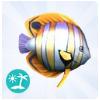 Ryba motyl