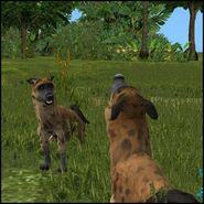 Hyena 1