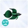 Bojownik zielony