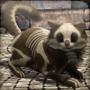:Kategoria:Fanon/Zwierzaki