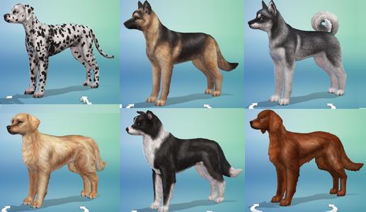 Różne psy w trybie tworzenia sima