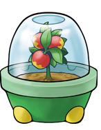 Die Beeren und ihre Funktionen