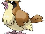 016 - Pidgey