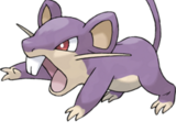 019 - Rattata