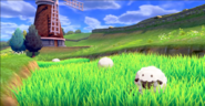 Wooloo in the grass