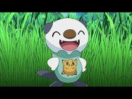 UK- Oshawott's lost scalchop - Pokémon the Series- Black & White - Official Clip