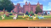 Pokémon Camp Eeveelution