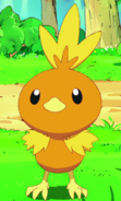 Torchic Pikachu and the Pokémon Music Squad