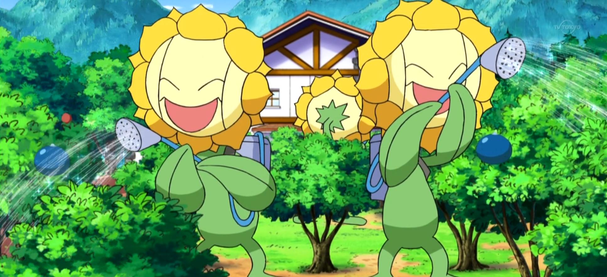 Lulu's Sunflora