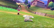 Pokemon-sword-shield-3