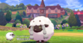 Sheep Pokémon Wooloo