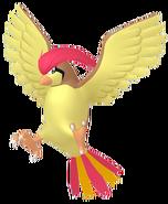 017Pidgeotto Pokémon HOME