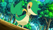 Trip Snivy.png