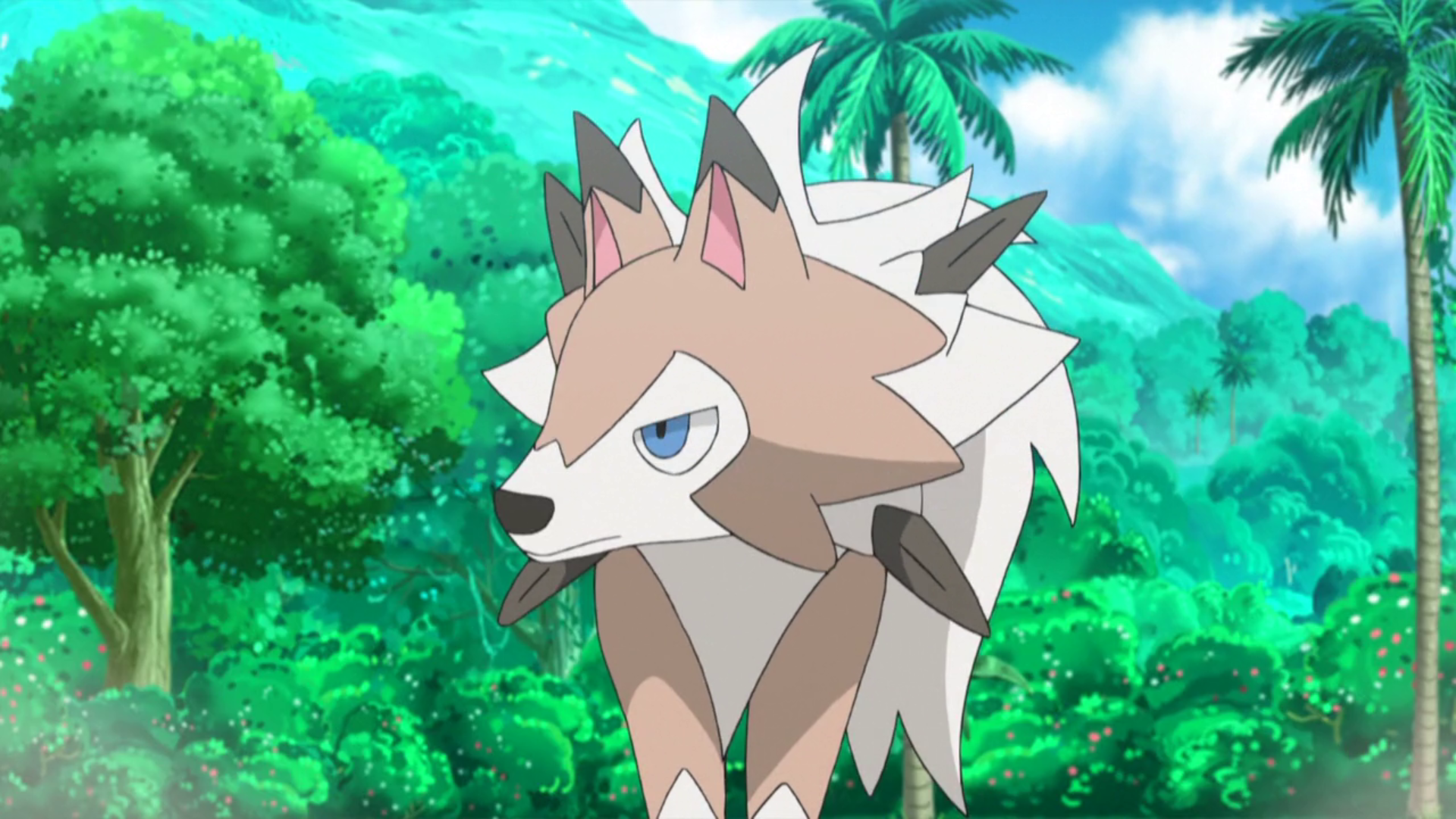 Lycanroc accompanied Olivia around Akala Island. It was sent to battle Ash in the Grand Trial.