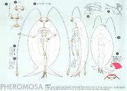 Pheromosa SM concept art